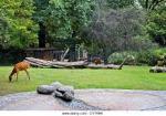 Technical report by Ogbonnaya Michael David ( U.I zoological garden)
