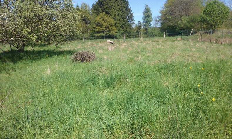 Mouton Saulxures