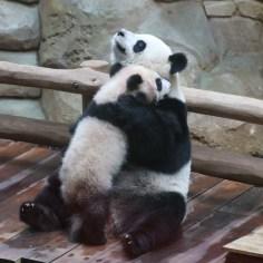 438aba-bebe-panda-ap9i6985