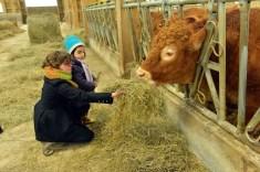 Les enfants aiment nourrir les vaches du Masbareau