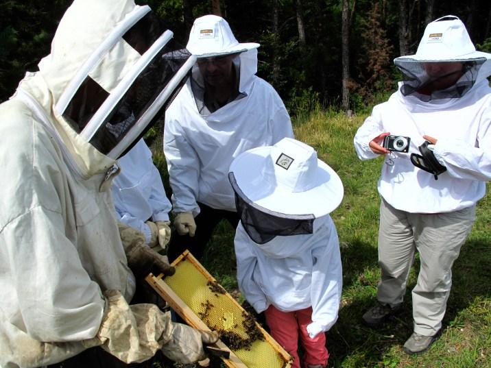 Découverte des ruches par les hôtes