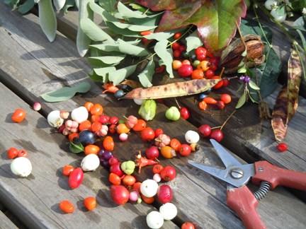Randonnée découverte des plantes toxiques
