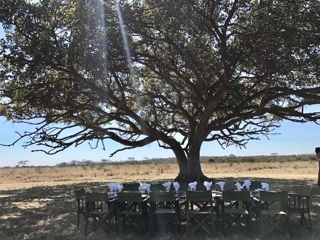 baobab tree Zimbabwe