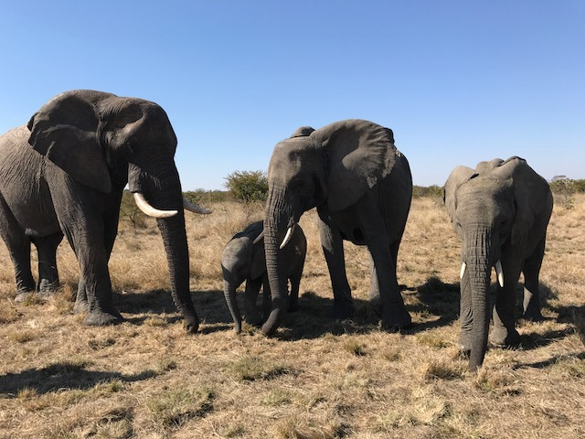 A family of elephants at Pamuzinda Lodge