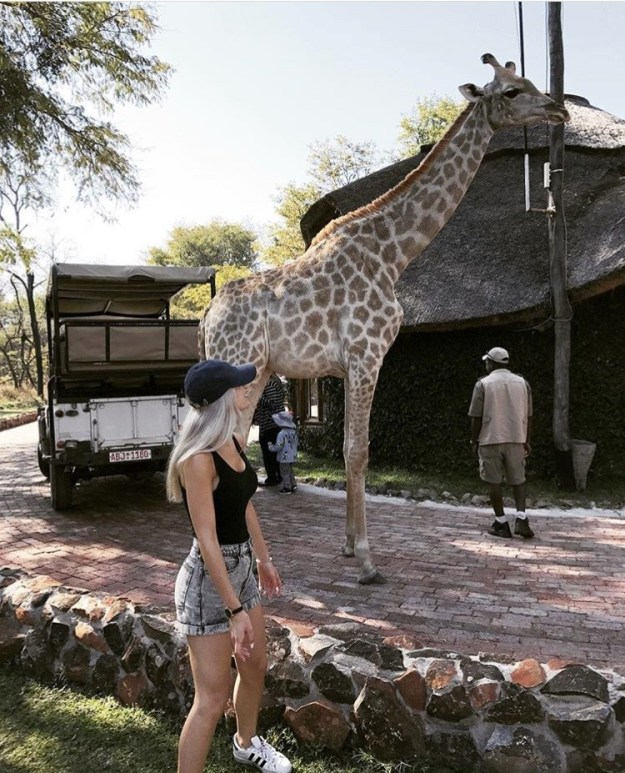 A giraffe at Pamuzinda Lodge, Zimbabwe