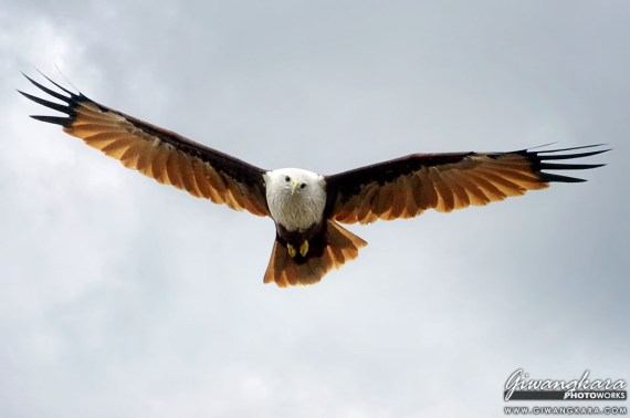 Bird  Givangkara Photo Works