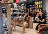 Sidewalk Dog $300 Kriser Gift Card Giveaway