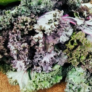 Purple kale at Eastern Market