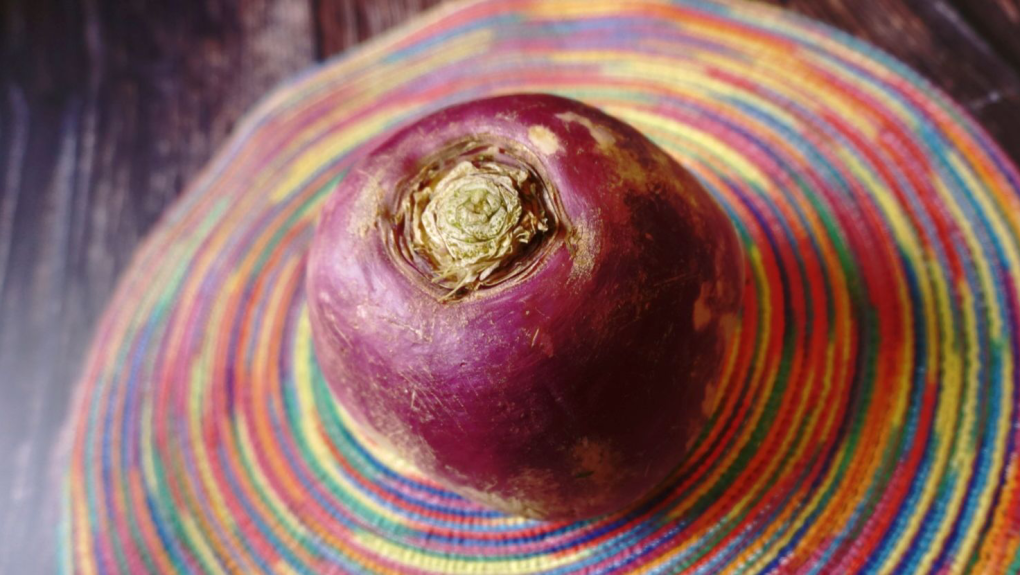 My huge turnip for the paleo root vegetable pot roast