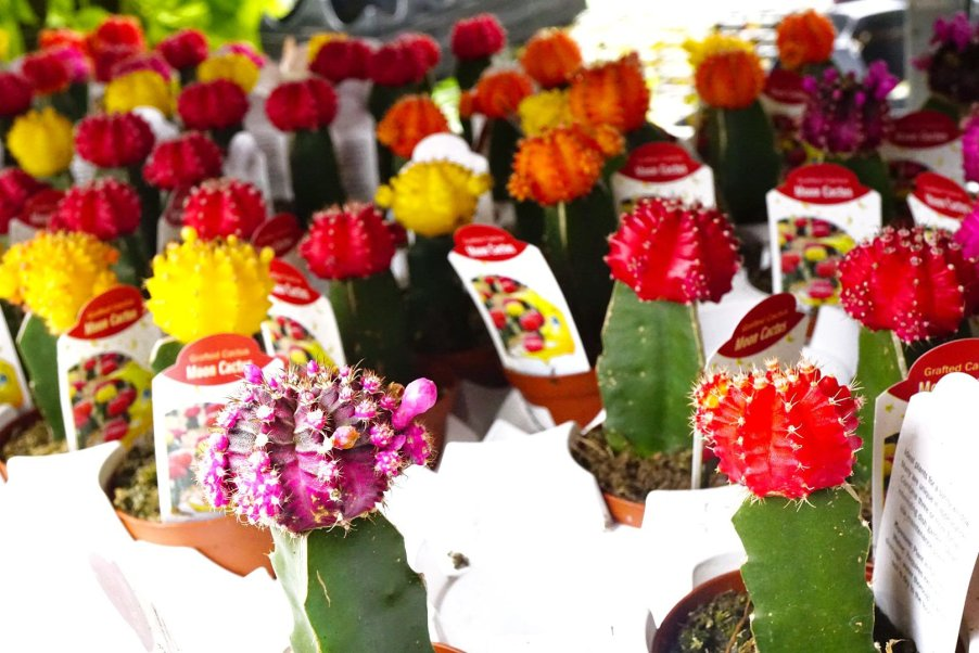 Cactus at Eastern Market Flower Day 2019