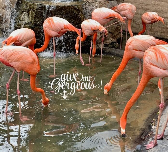 GiveMeGorgeous flamingos