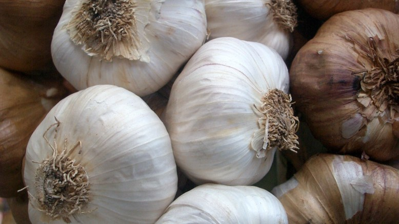 Image of garlic