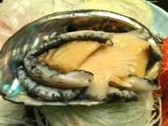 Awabi (abalone).