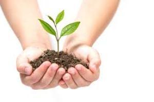 Nuturer Holding Plant w Hands
