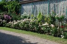 Rose Flower Small Corner Garden Ideas