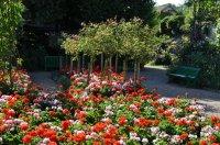 carpet of flowers - Home The Honoroak
