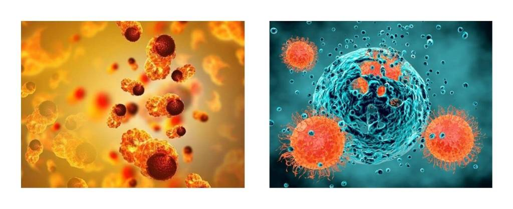 The Immune System's Deception because of Cancer