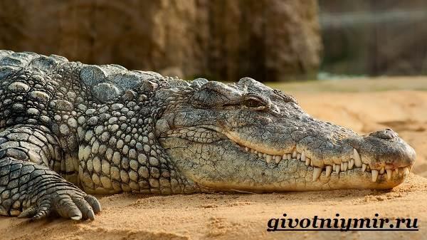 تمساح الحيوانات النمط الحيوي - والبيئة - الموئل التمساح - 2