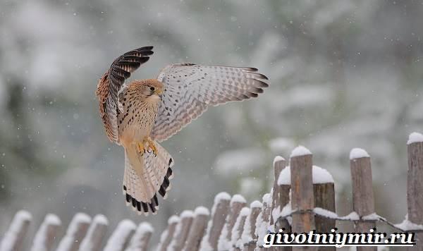 Do Rusi majú veľké vtáky