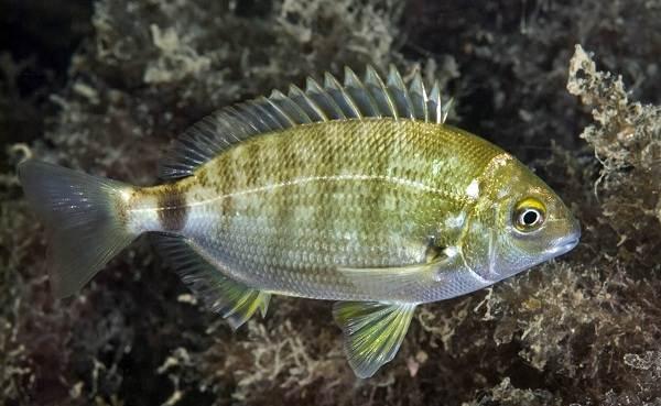 Какую можно есть рыбу на диете