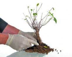болезни дерева