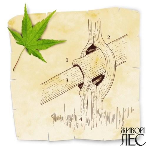 Рис.3. Соединение ветви и ствола
