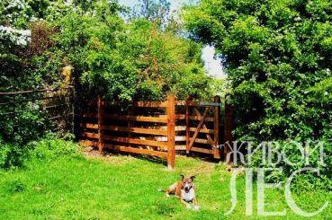 kissing-gate-1334281
