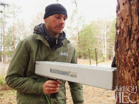 Резистограф позволяет выявлять пороки в древесине живых деревьев