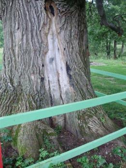 гнили деревьев