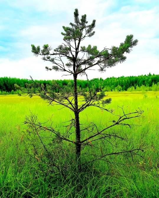 растения болот