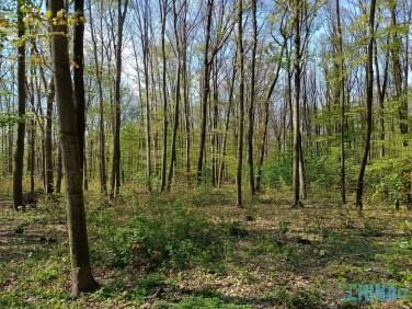 Realme dobře zachytilo i náročnou lesní scénu