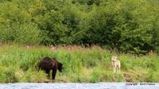 bear-and-wolfimg_4400-001