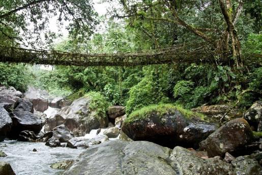 Ponte di radici in India