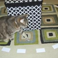 Kitty Picks a Winner!!!! (Eventually...)