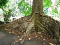 Bogor Botanical Gardens Kebun Raya23