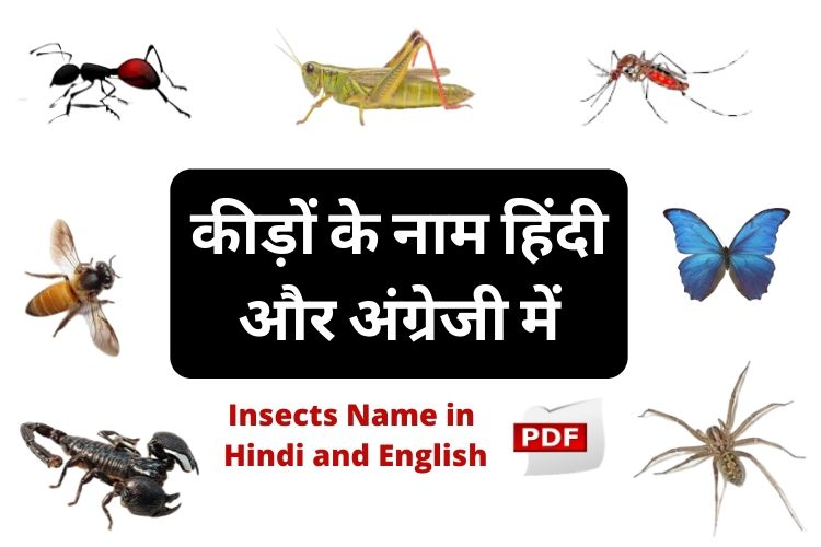 कीटों के नाम हिंदी और अंग्रेजी में - Insects Name in Hindi and English