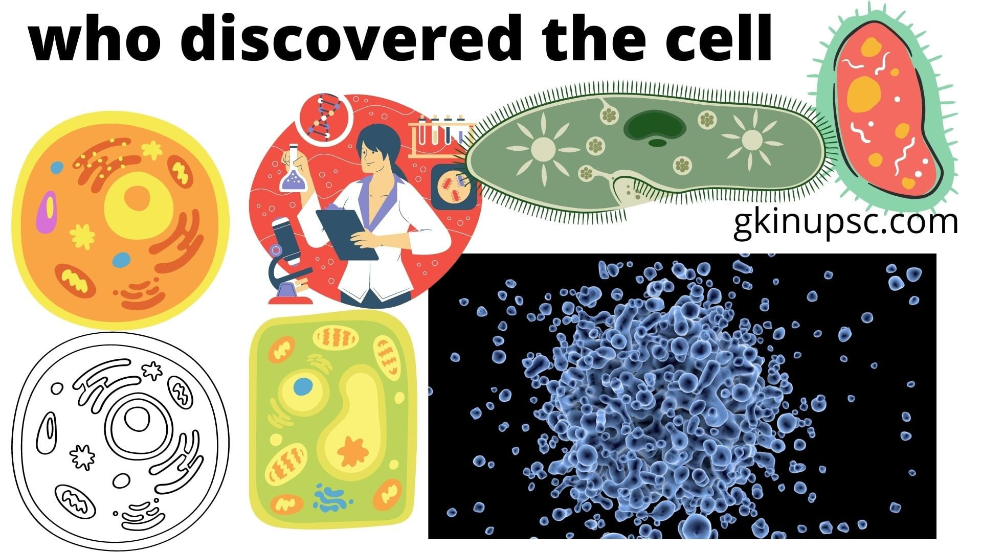 who discovered the cell