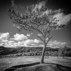 """""""Reaching for the Clouds"""", Canon 5D Mk3, 16-35mm f/2.8L Mk2, Singh-Ray Galen Rowell 2-stop soft edge ND grad, Converted to B&W in Lightroom"""