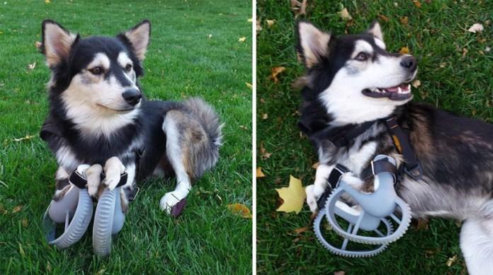 cachorro-derby-impressora-3d-detalhe-repeticao-blog-geek-publicitario