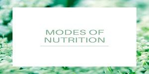 autotrophic nutrition