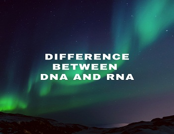 Difference between DNA and RNA - DNA and RNA