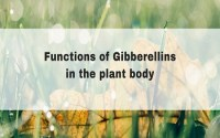 Functions of Gibberellins in the plant body
