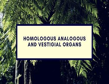 Homologous Analogous And Vestigial Organs - Homologous Analogous And Vestigial Organs