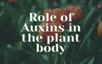 Role of Auxins in the plant body