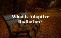 What is Adaptive Radiation