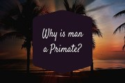 Why is man a Primate?