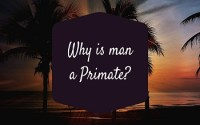 Why is man a Primate