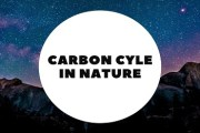 Carbon Cycle In Nature