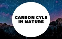 carbon cycle in environment