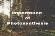 Define Photosynthesis. Write down the importance of Photosynthesis